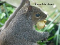 a mouthful of apple