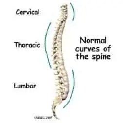 Spinal Curves: Lordosis, Kyphosis, and Scoliosis