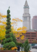 A tree spiral and a tower building