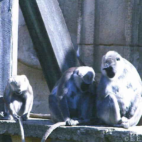 VaMu-Zoo-Affen