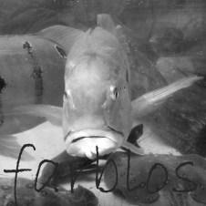 2810-farblos-Fischblick