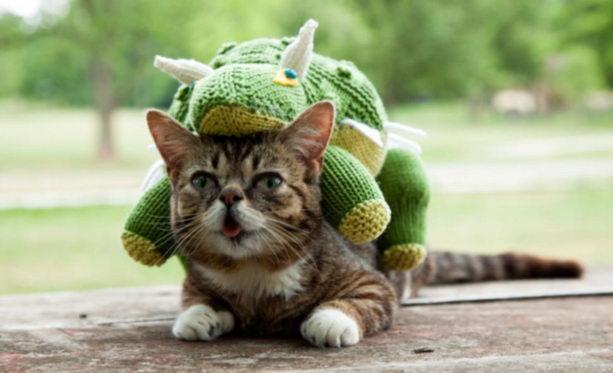 Самая милая кошка в мире