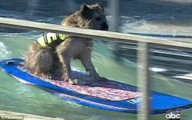 Норман умеет кататься на серфинге