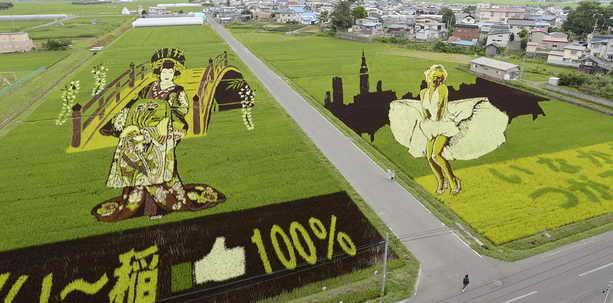 Композиции на рисовом поле