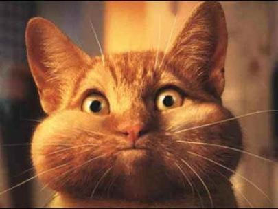 silly_cat.jpg