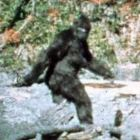 Patterson-Gimlin film capture