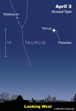 Pleiades is right next to Venus on the morning of April 3 looking west