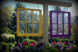 Winterberry windows2