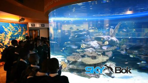 Two Oceans Aquarium Cape Town South Africa