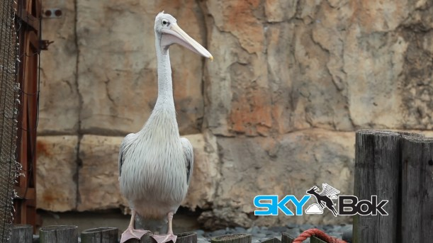 East London Aquarium Video Profiling Skybok South Africa