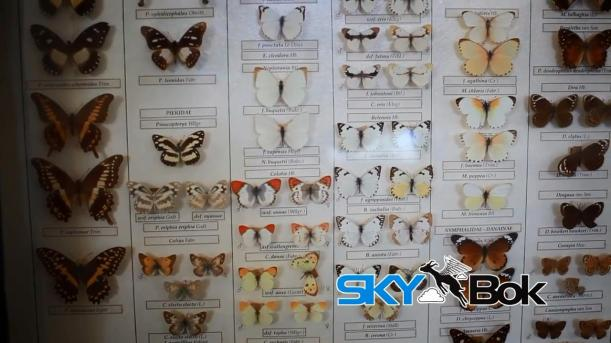 Skybok- Albany Museum (Grahamstown, South Africa).mp4_snapshot_00.34_[2014.03.03_14.24.25]