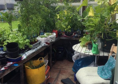 My conservatory and garden