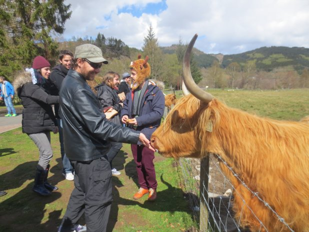 Feeding the Hairy Coos