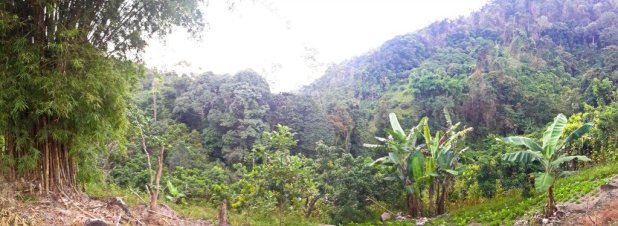 Doi Suthet Vegetation Panorama