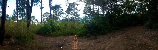 Trail Branch to Doi Suthep Temple