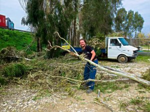 Clearing the Trees for Workaway in Sarzana
