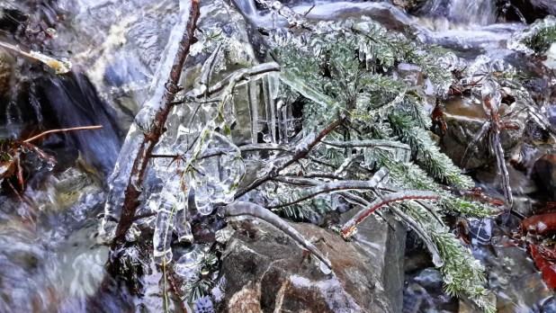 Frozen Pine Branch