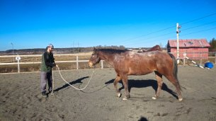 Selfie Training Horse #4