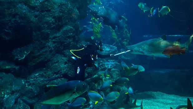 Sharks Being Fed at Sea Life