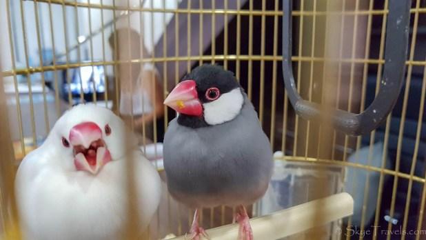 Birds at NEBO Hotel