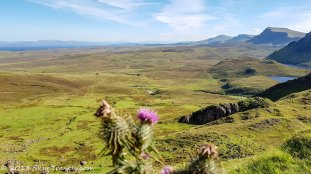 The Quiraing with a Thistle