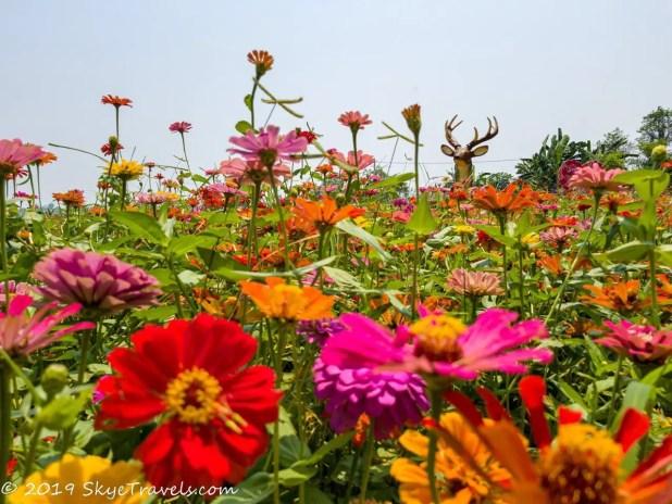 Buddha Park Flowers #1