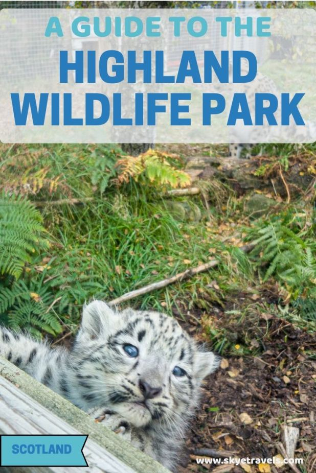 The Highland Wildlife Park in the Cairngorm National Park of Scotland is the second attraction managed by the Royal Zoological Society of Scotland. #Scotland #Safari #Conservation #RZSS #HighlandWildlifePark #Cairngorm
