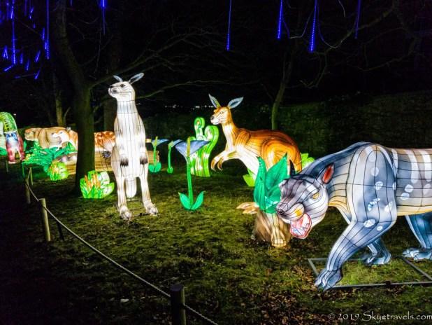 Kangaroo Lanterns
