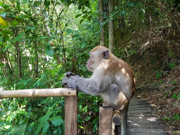 Monkey in Ao Nang Beach