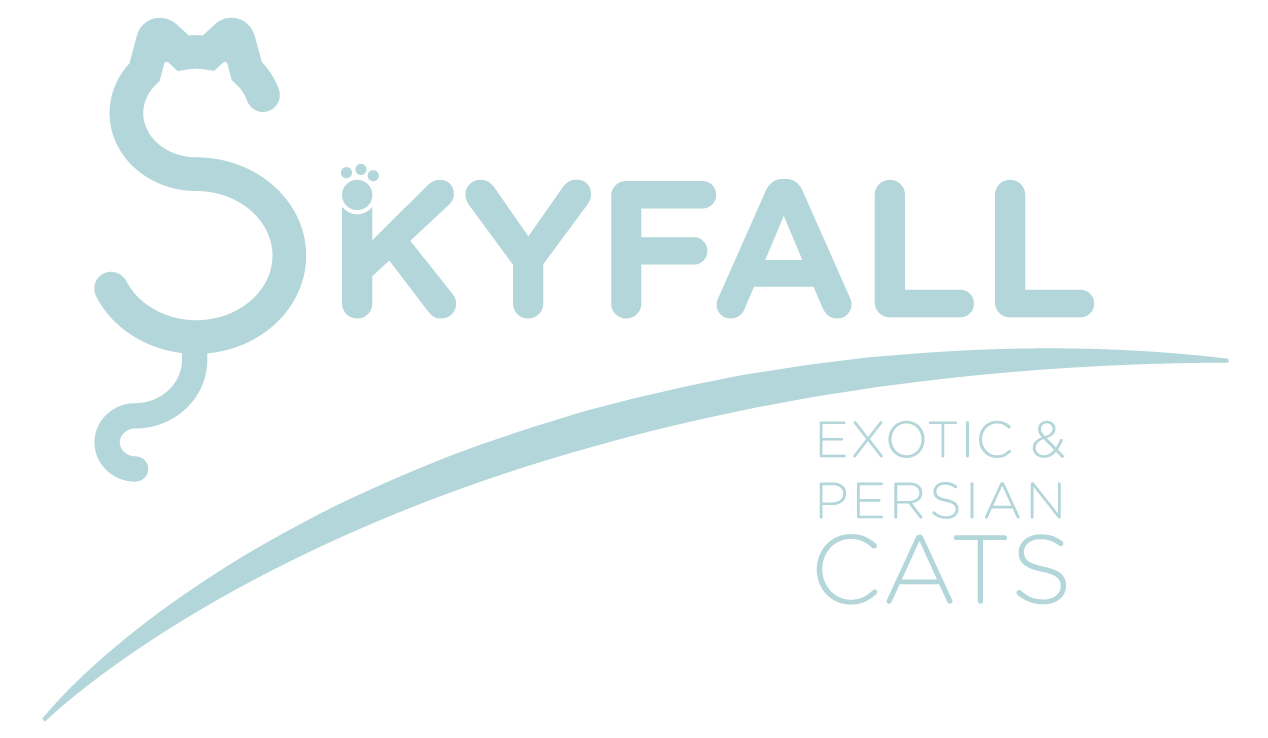 Skyfall Cats