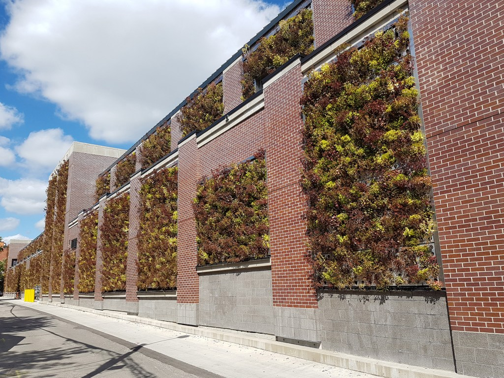 Foliage growing on exterior wall