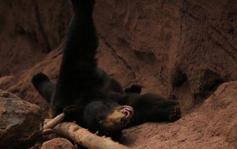 Bears + Arizona = Bearizona!