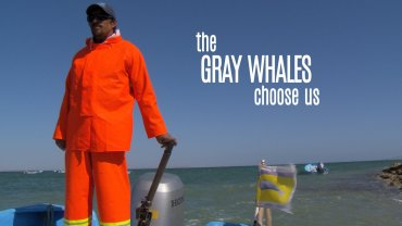 The Gray Whales Choose Us