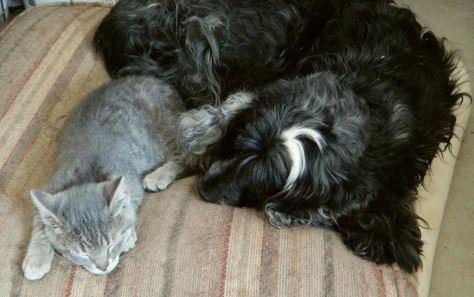 Princess Babycat and Taz the Dog