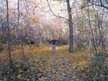 I love autumn leaves!