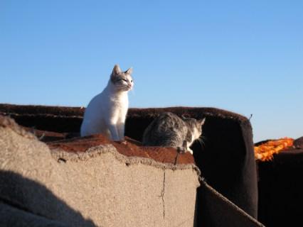 nomad cat and the berber cat enjoying the sunrise