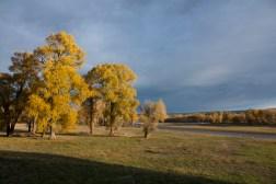 SABourne_montana_yellow