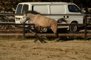 Ifestos... I love to jump!