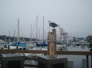 Seagull Sculpture - Budd Bay