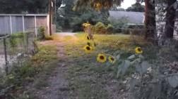 Garden alleyway