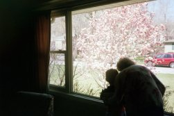 grandma and the cherry blossoms