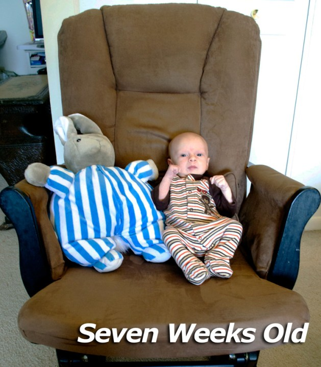 seven-weeks-old