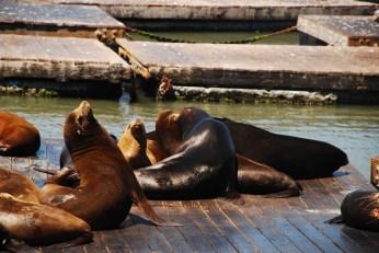 San Francisco - Fishermans' Wharf