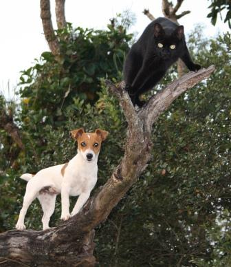 Pippie Pipstertbrak klim boom om by haar maatjie Oreo te wees...