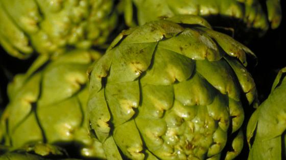 close up of untrimmed artichokes | Slap Dash Mom