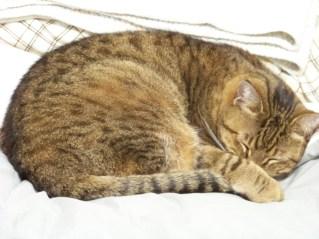 Toby Sleeps