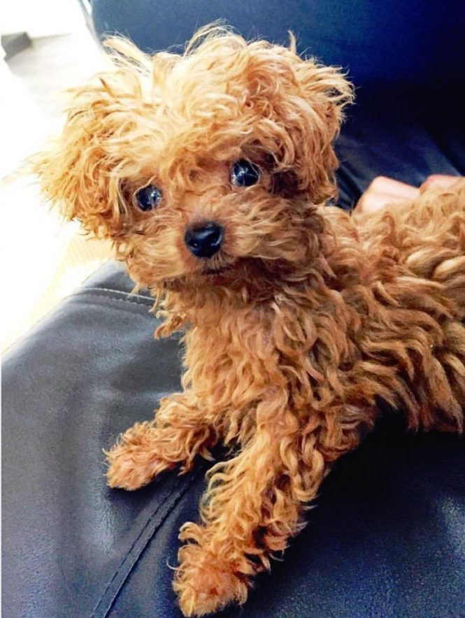 Are You Wondering What The Best Small Dog Breeds For An Apartment Be They Dogs Or Adaptability Of A To Living E Like