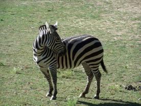 zoo17