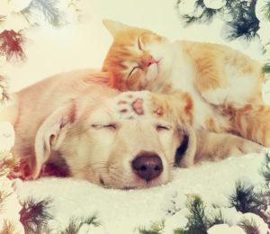 Christmas kitten and puppy sleeping