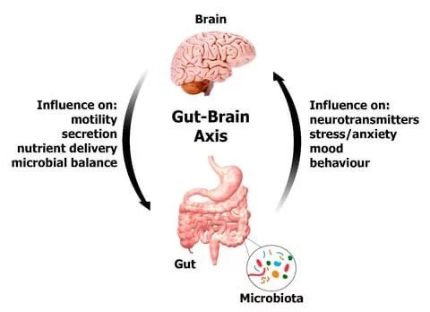 Image result for gut is second brain